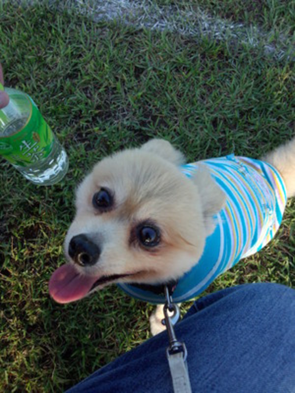 愛犬と保険